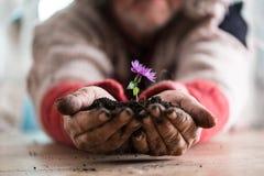 供以人员拿着在土壤的一朵紫色花 免版税库存图片