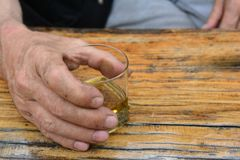 供以人员拿着杯好,老李子白兰地酒的` s手 图库摄影