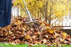 供以人员收集下落的秋叶第一人景色 图库摄影