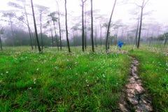 供以人员森林的探险家, Phu Soi Dao,泰国 免版税库存照片