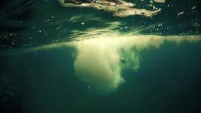 供以人员潜水入海,水线射击 影视素材