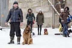 供以人员走与德国牧羊犬,冬天,社论 库存照片