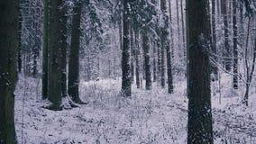 供以人员运行在冬天森林启发和刺激概念的足迹赛跑者户外 股票录像