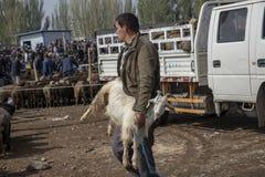 供以人员运载的山羊家畜销售的thorugh星期天,喀什,奇恩角 免版税库存图片