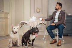 供以人员饮用的茶在桌上靠近两条狗 黑美洲叭喇或staphorshire狗和白色bulterrier在葡萄酒interi 免版税库存照片