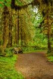 供徒步旅行的小道和长凳与用青苔盖的树在雨中 免版税库存照片