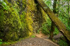 供徒步旅行的小道在俄勒冈 免版税库存图片