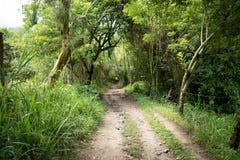 供徒步旅行的小道在哥伦比亚密林 免版税库存图片