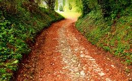 供徒步旅行的小道在意大利 库存图片