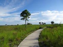 供徒步旅行的小道在沼泽地 免版税图库摄影