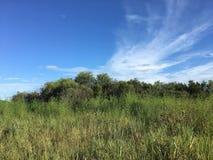 供徒步旅行的小道在沼泽地 免版税库存照片