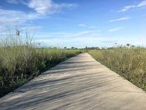供徒步旅行的小道在沼泽地 库存图片