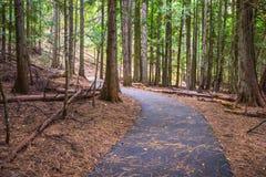 供徒步旅行的小道杉木森林野生生物保护区 库存照片