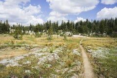 供徒步旅行的小道标题到森林里 库存图片