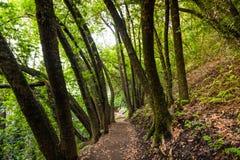供徒步旅行的小道看法在别墅蒙塔尔沃县公园,萨拉托加,旧金山湾区,加利福尼亚 库存照片