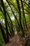 供徒步旅行的小道看法在别墅蒙塔尔沃县公园,萨拉托加,旧金山湾区,加利福尼亚 免版税库存图片