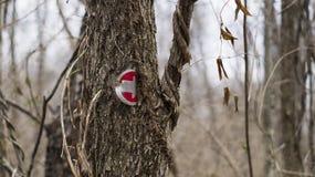 供徒步旅行的小道箭头 免版税库存照片