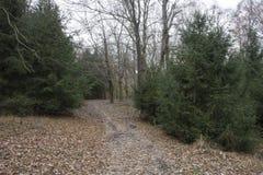 供徒步旅行的小道通过常青树 免版税库存图片