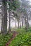 供徒步旅行的小道通过有薄雾的杉木森林 库存照片