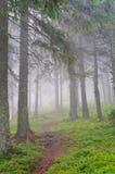 供徒步旅行的小道通过有薄雾的杉木森林 免版税图库摄影