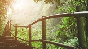 供徒步旅行的小道通过有通过commming的阳光的有雾的密林 图库摄影