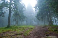 供徒步旅行的小道通过杉木森林 库存图片