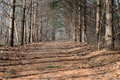 供徒步旅行的小道 库存照片