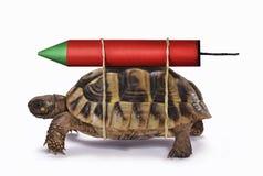 供给与火箭的乌龟动力 免版税库存照片