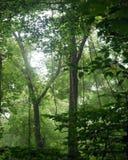 供花深绿色工厂春天阳光结构树树干住宿 免版税库存照片