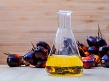 供选择燃料、生物柴油在实验室玻璃和红色棕榈fru 免版税库存照片