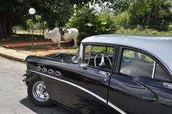 供选择的运输在古巴 免版税库存图片