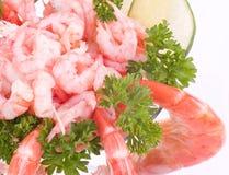 供食的变冷的虾 免版税库存图片