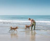 供以人员使用与在海滩的两条狗 免版税库存图片