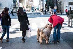 供以人员和他的acroos的狗等待绿色红绿灯在连接点 库存照片