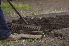 供以人员工作在庭院犁耙,排列床 图库摄影