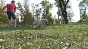 供以人员投掷棍棒或玩具动物的他的狗的 的拉布拉多或去的金毛猎犬拿来木棍子 男性所有者 库存照片