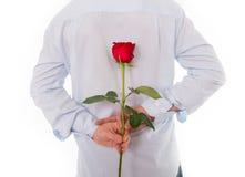 供以人员拿着在他的后的一朵唯一红色玫瑰  免版税图库摄影