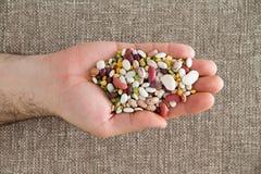 供以人员拿着15个被混合的豆类在他的手上 免版税库存图片