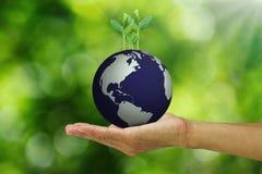 供以人员拿着从地球的` s手生长年轻绿色新芽在被弄脏的绿色bokeh背景 免版税库存照片