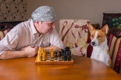 供以人员请求basenji狗做在棋家庭比赛的接下来的步骤 免版税库存图片