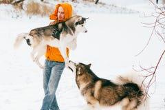 供以人员走与狗与雪的冬时在森林爱斯基摩狗和爱斯基摩友谊 免版税库存图片