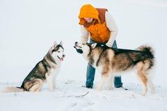 供以人员走与狗与雪的冬时在森林爱斯基摩狗和爱斯基摩友谊 图库摄影