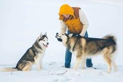 供以人员走与狗与雪的冬时在森林的爱斯基摩狗 免版税图库摄影