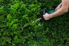 供以人员驯服与一个电整理者的树篱 库存图片