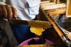 供以人员` s手和一把特别刀子切开的蜡从蜂蜜框架 库存图片