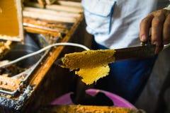 供以人员` s手和一把特别刀子切开的蜡从蜂蜜框架 免版税图库摄影