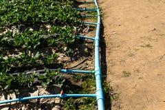 供水系统在草莓庭院里 免版税库存图片