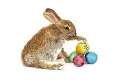 供以座位的兔子 免版税库存图片