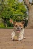 伴侣动物-狗 库存图片