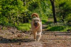 伴侣动物-狗 免版税库存图片